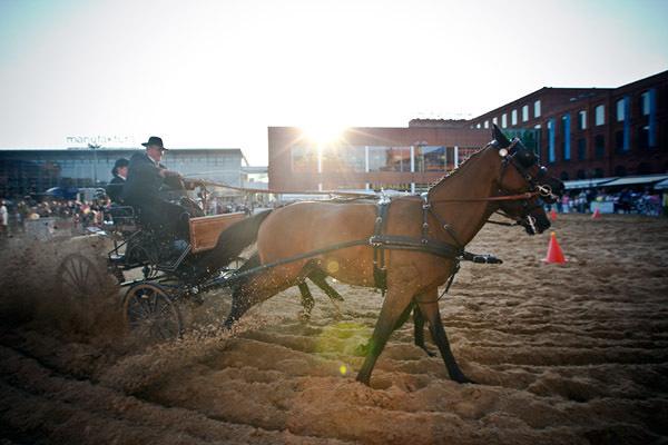 Na plaży Manufaktury odbywają się pokazy konne.